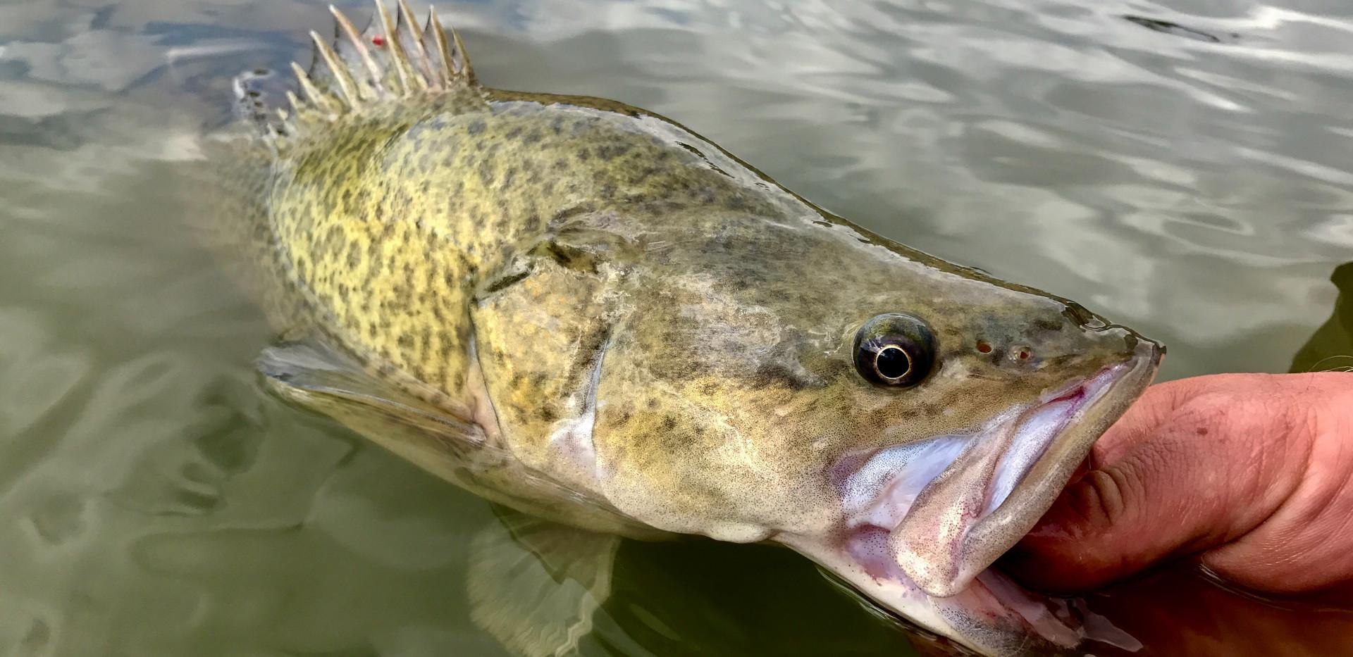 Fishing 5.jpg