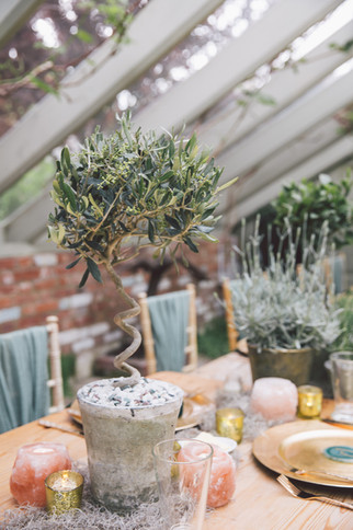 Potted Plants for Wedding Reception Table Centrepieces