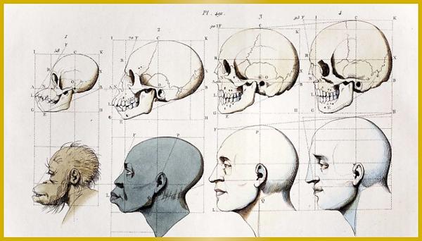 craniometry-headdiagram.png
