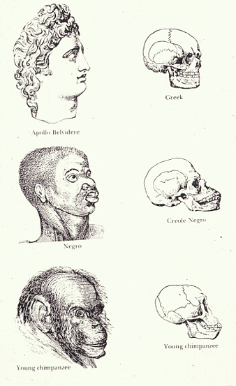 craniometry title pic.png