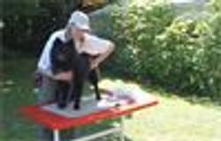 Erste Hilfe Hundeschule Sitz