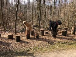Wald Training