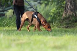 Hundeschule Sitz trailen