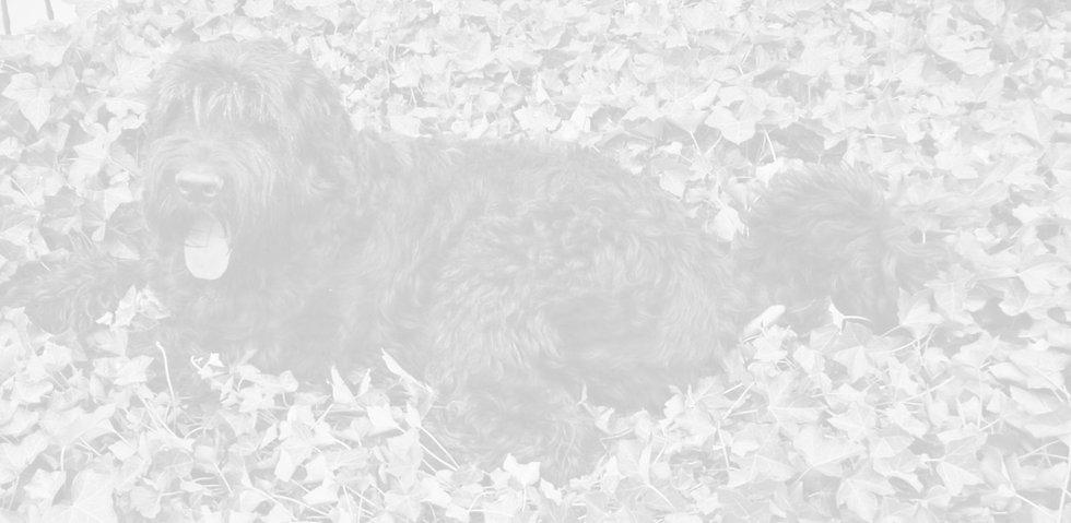 Hundeschule%2520Sitz%2520Merl_edited_edi