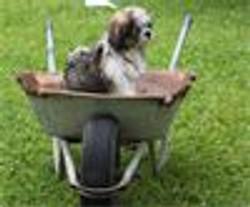 HundeschuleSitz Welpen