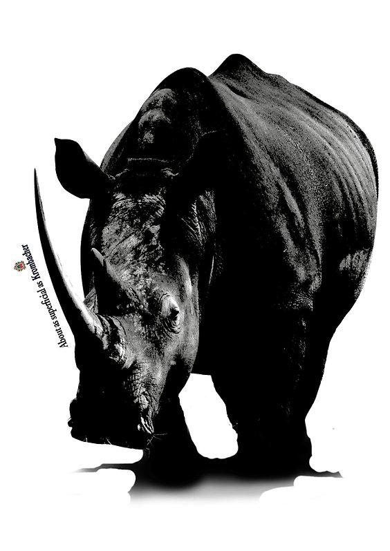Krombacher Rhino.jpg