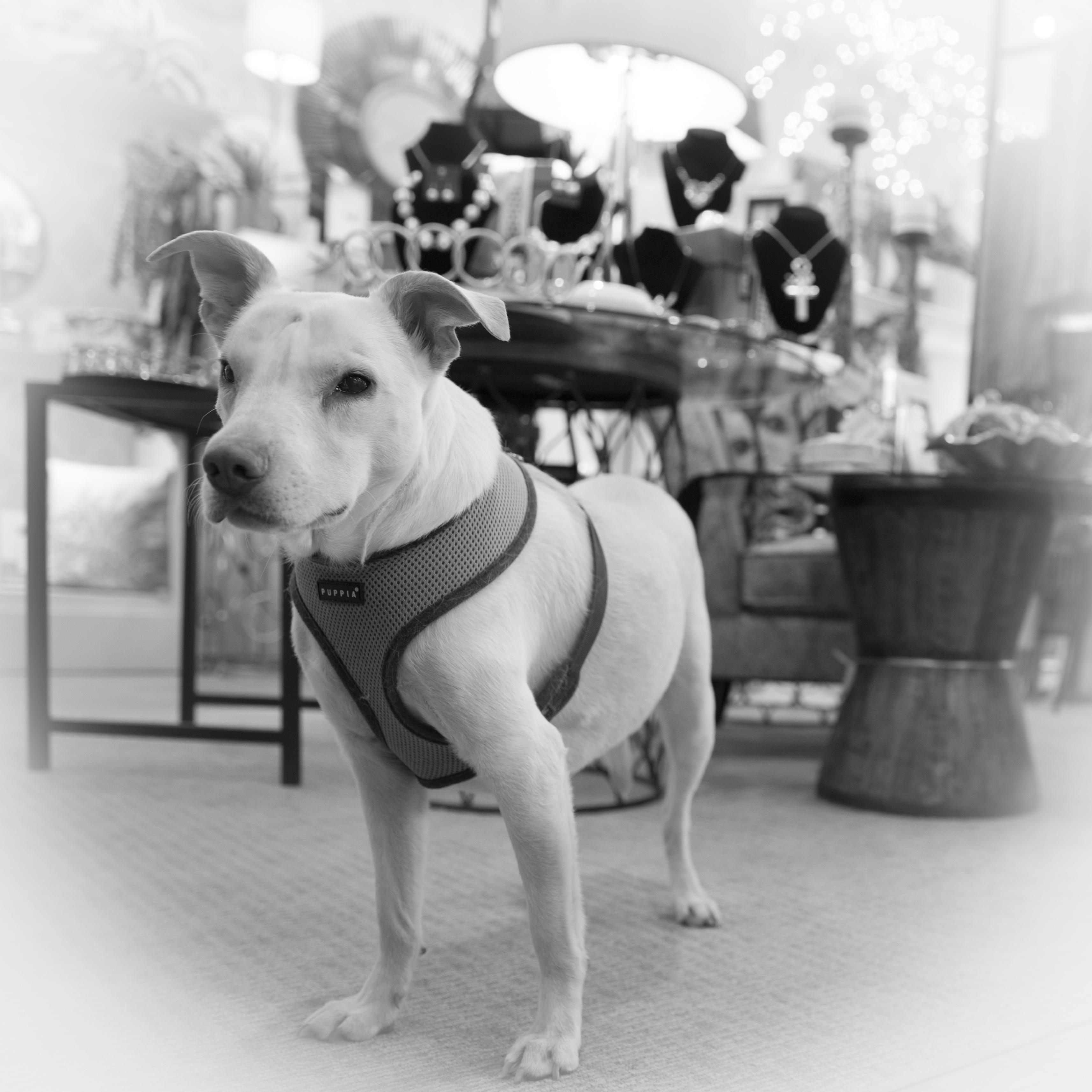Sydney the Dog