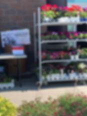 Carson Greenhouses.jpg