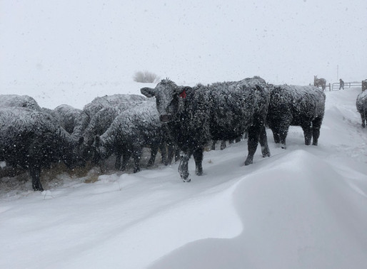 ATTN: LIVESTOCK PRODUCERS AFFECTED BY APRIL BLIZZARD WESLEY