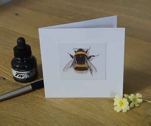 Buff-tailed Bumblebee Card