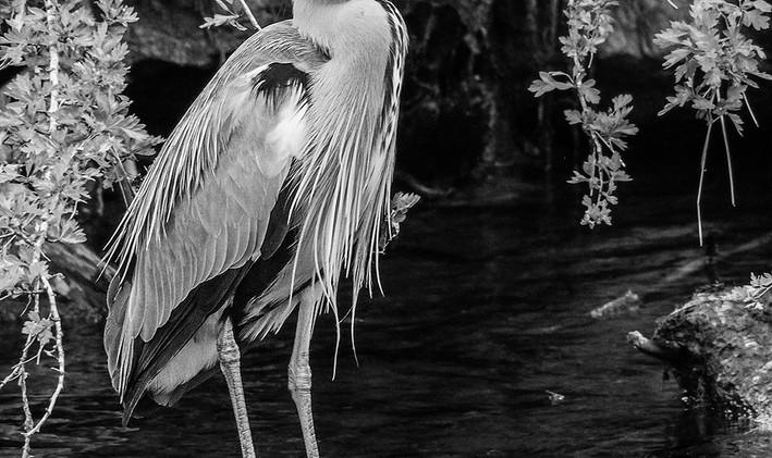Heron in a Gorge - Neil Barlow