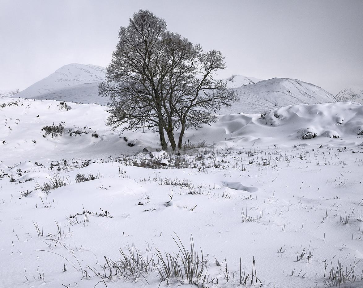 Rannoch Tree - David Fiddes