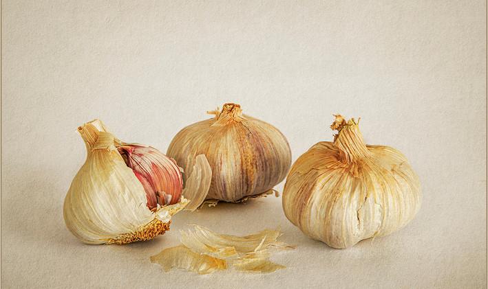 Garlic Study - Isabella Hillhouse