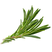 kissclipart-transparent-herbs-png-clipar