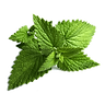 herbs-png-22990.png