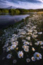 2048_DSC9880-Edit-2-Edit-Edit.jpg