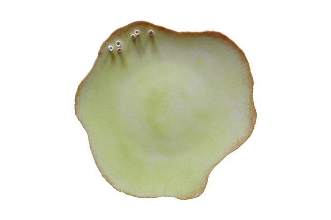 PLATE HAUT.png