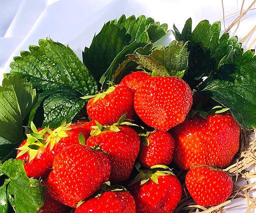 Strawberries%20(10)_edited.jpg