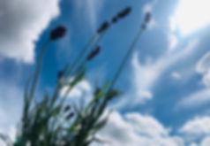 Lavender Sky (7).jpg