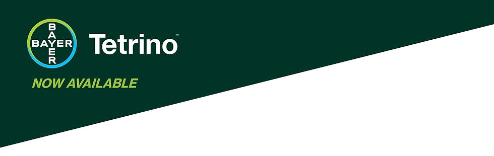 Tetrino Page Banner logo green backgroun