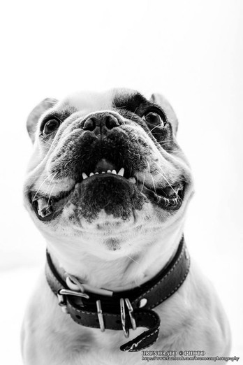 Pet Photoshoots
