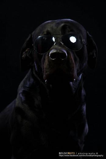 Buddy The Best - Black in Dark (Studio Photography)