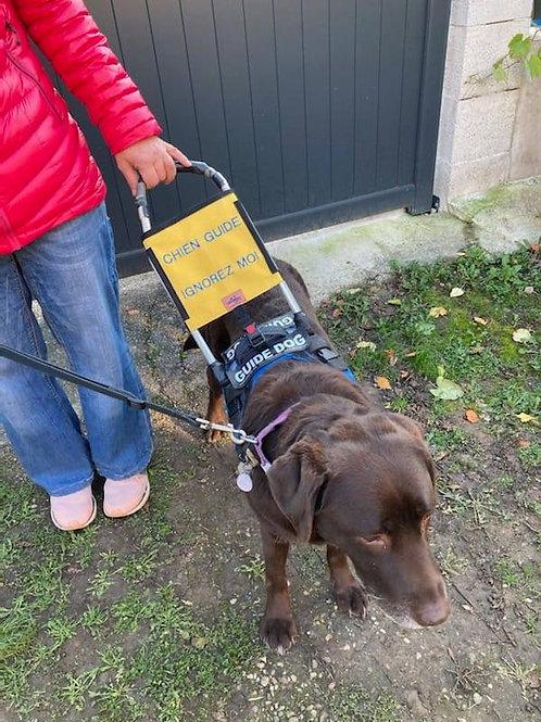 Dispositif d'information arceau chien-guide