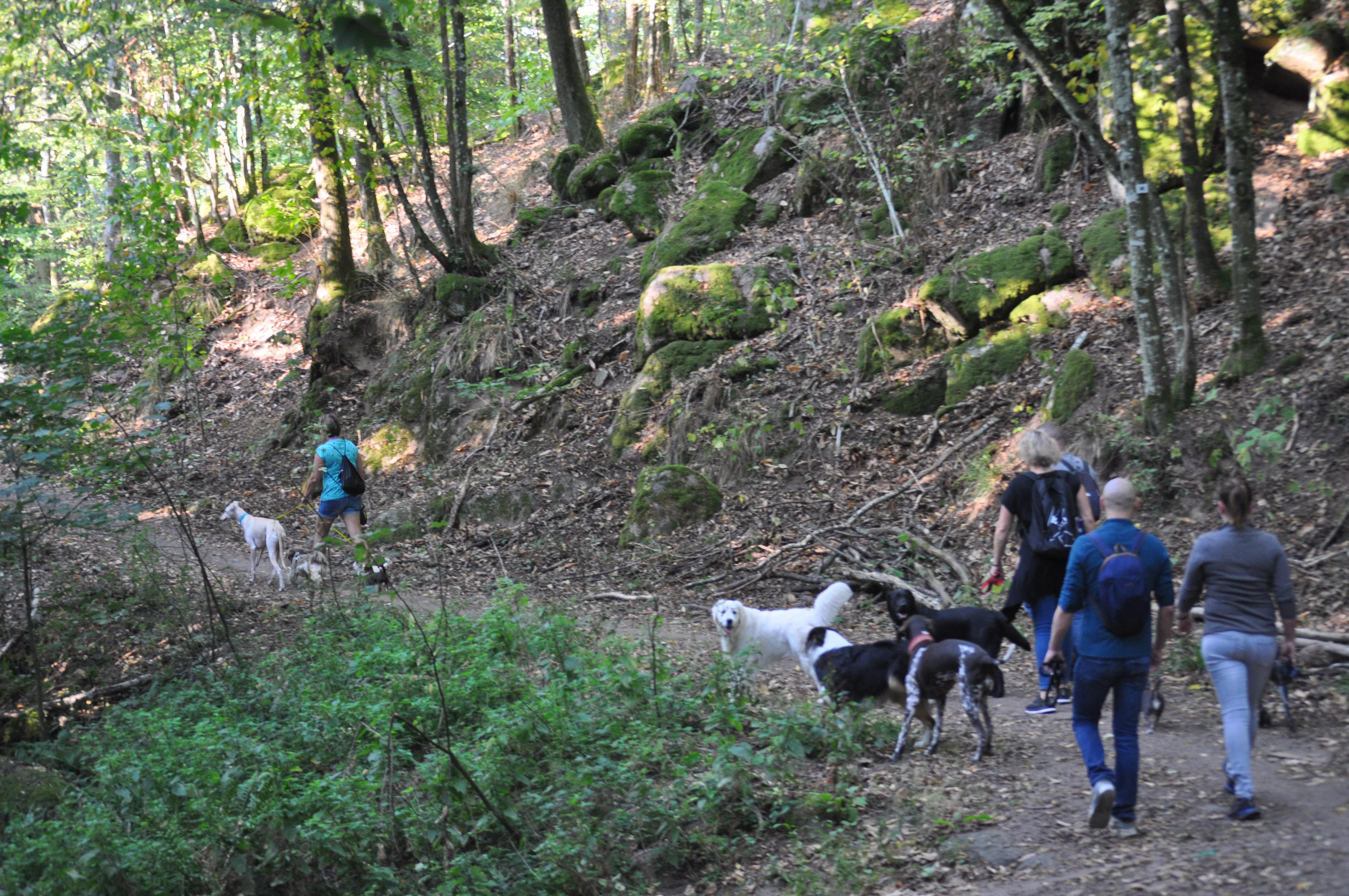 Randonnée canine à Heilingenstein