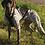 Thumbnail: Harnais Xback dog running