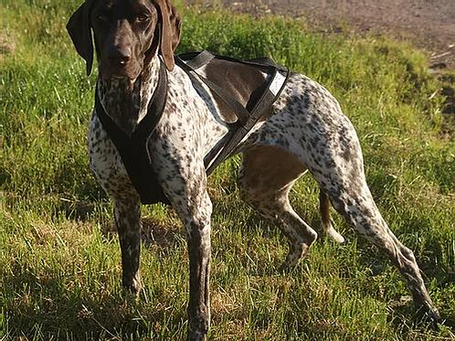 Harnais Xback dog running