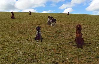 education canine , comportementaliste ,educateur, canin  , chien , toutous , zellwiller , bas rhin , alsace , professionnel , bienveillance , positif , salon de toilettage , bien être , chien,