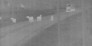 Radar-Based Animal Detection Project