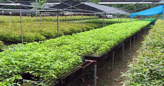 plantingbiodiverseinpanama.jpg
