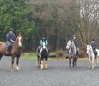 Lodge Equine Stables at Gosford on a hack