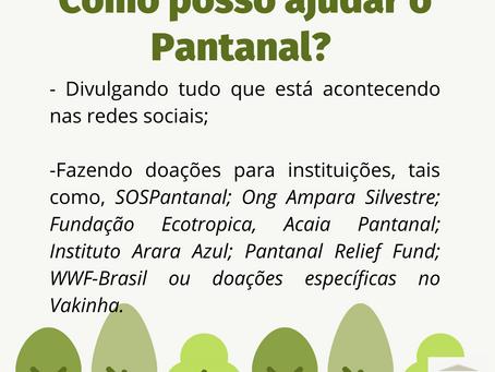 Como ajudar o Pantanal?