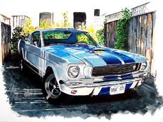 Mustang Corral