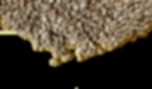 Semilla Girasol Esquina 3-cutout.png
