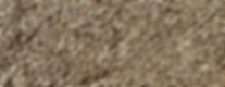 semilla Linaza 1000px.png