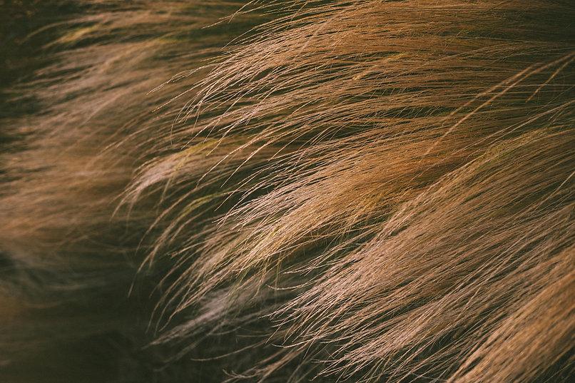 cezanne-hair-smoothing.jpg