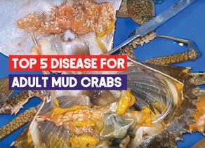 Top 5 Diseases for Mud Crab Aquaculture | Aquaculture Technology