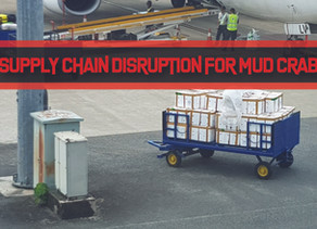 Supply Chain Disruptions in the Mud Crab Trade | Business Insights
