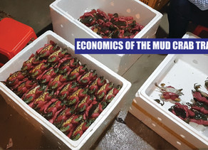 A Supply and Demand | Economic Analysis and Outlook of the Mud Crab (Scylla Spp) Trade