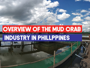Overview of the Mud (Mangrove) Crab industry in the Philippines (Q3-2019) | Industry Report