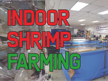 Indoor Farming with Litopenaeus vannamei with Biofloc Technology | Aquaculture Technology