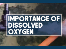 The Importance of Dissolved Oxygen for Mud Crab Vertical Farming | Aquaculture Technology