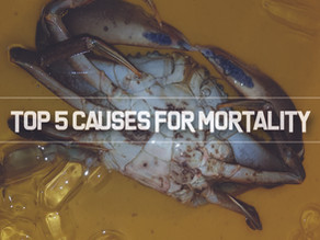 Top 5 reasons for Crab Mortality | Aquaculture Technology