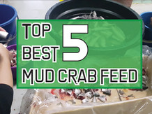 What to feed mud crabs? | Top 5 feeds for mud crabs.