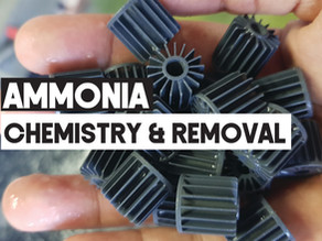 Ammonia Chemistry and Removal Techniques in RAS | Aquaculture Technology