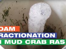 Foam Fractionation Technology in RAS for Mud Crab Aquaculture | Aquaculture Technology