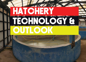 Mud Crab Hatcheries technology and outlook | Aquaculture Technology
